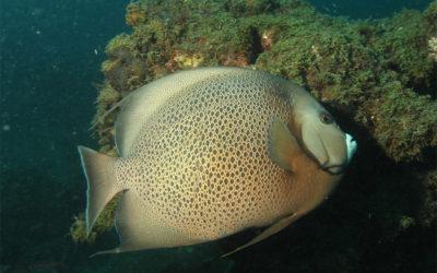 Vente a bucear a Santa Marta con AquaSport