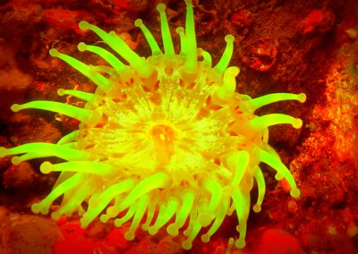 flluorescent-night-dive-tayrona-santamarta-scubadiving