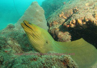 morena-verde-scuba-diving-tayrona-park-aquasport-al-limite