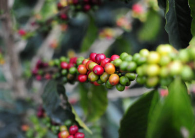 cafe-minca-aquasport-trecking